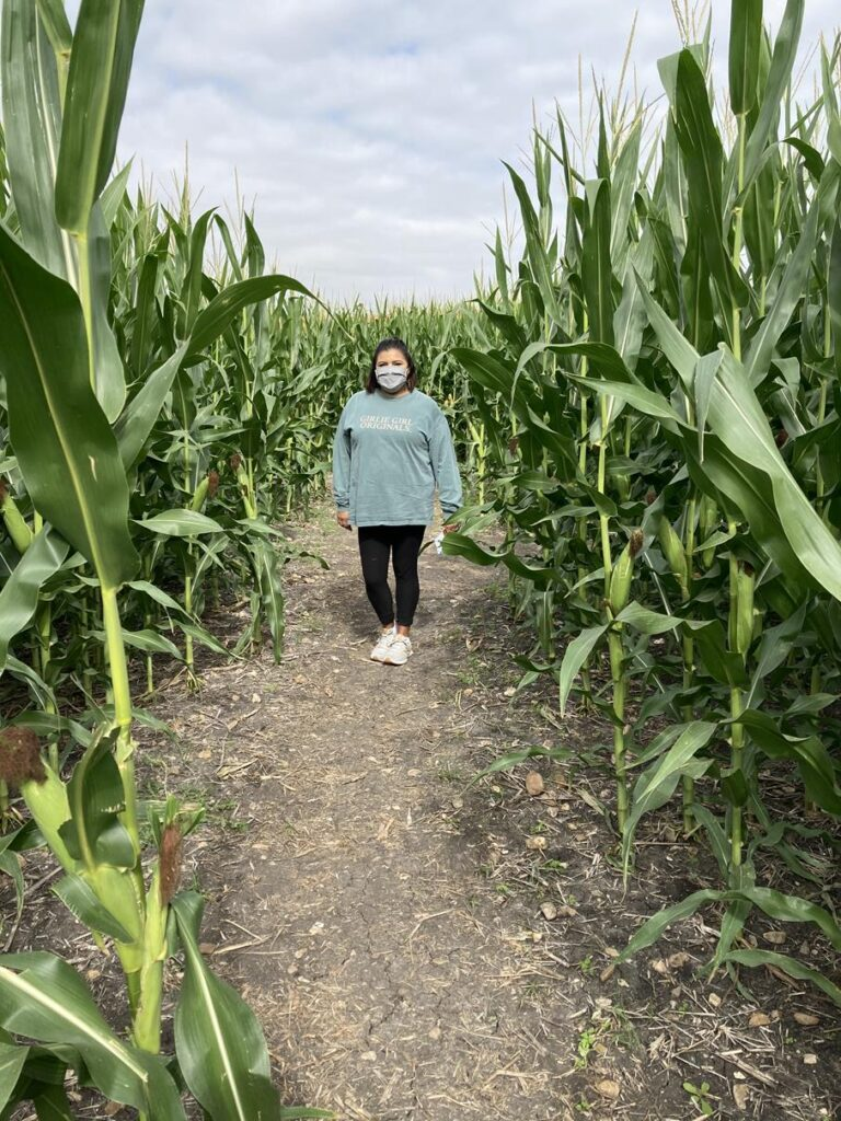 Staying safe at the corn maze with a mask
