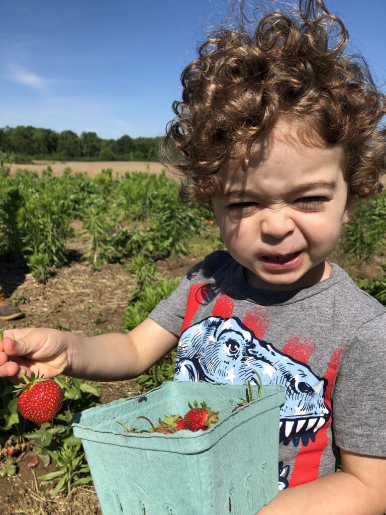 PICKING STRAWBERRIES IN THE SUMMER